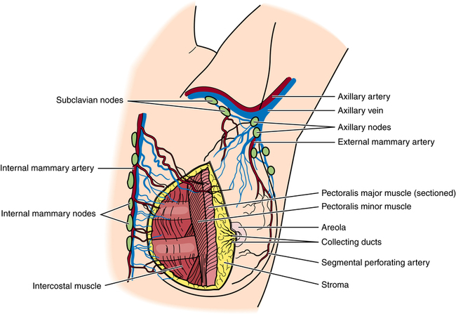General Surgery Basicmedical Key