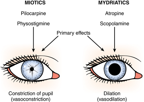 Ophthalmic surgery | Basicmedical KeyDilated Pupils Drugs Miosis