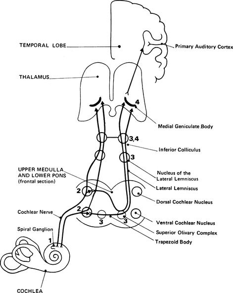 anatomy  physiology  and classification of the generators