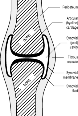 The Anatomy Of Physics Basicmedical Key A form of articulation in which the bones are rigidly fused by cartilage. the anatomy of physics basicmedical key