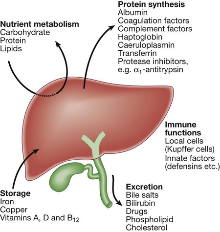 Liver And Biliary Tract Disease Basicmedical Key