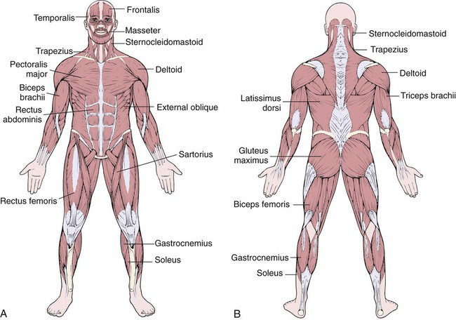 diseases and conditions of the musculoskeletal system, Human Body