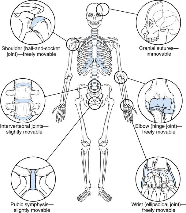 Diseases And Conditions Of The Musculoskeletal System Basicmedical Key